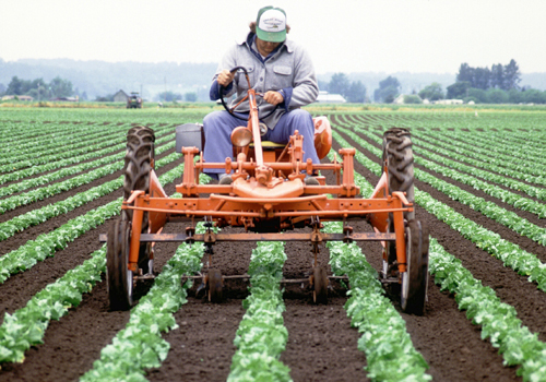 agricultural tools essay Essay on the importance of agriculture article shared by plants and animals, the backbone of agriculture have been a part of the human experience since.