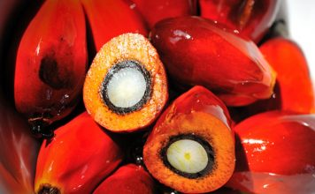 Palm Oil Seed, Palm Oil, Oil Palm