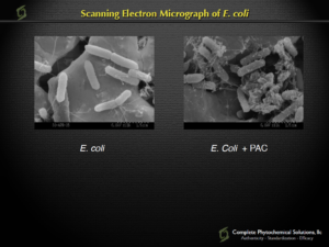 Figure 1: This slide shows a before and after representation of the E. Coli bacteria being wrapped up by the whole food cranberry powder, which is standardized for 7% total PACs, both soluble and insoluble. Journal of Functional Foods, August 2016.