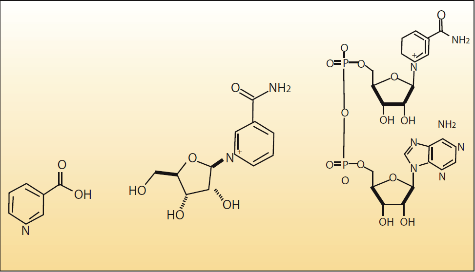 Figure 1. Structural formulas for (left to right) Niacin, Nicotinamide riboside and Nicotinamide adenine dinuclaotide.