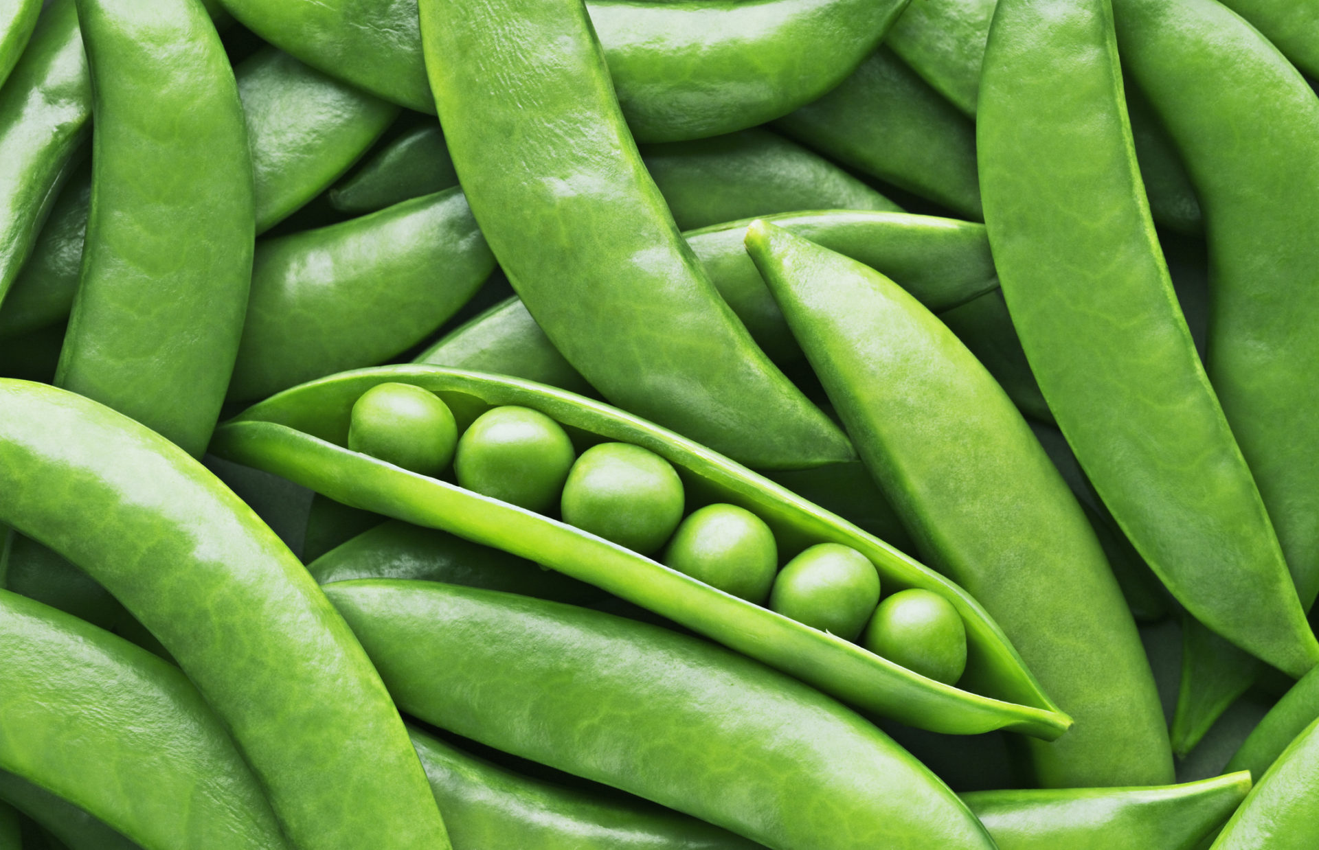 cargill invests in puris to expand pea production