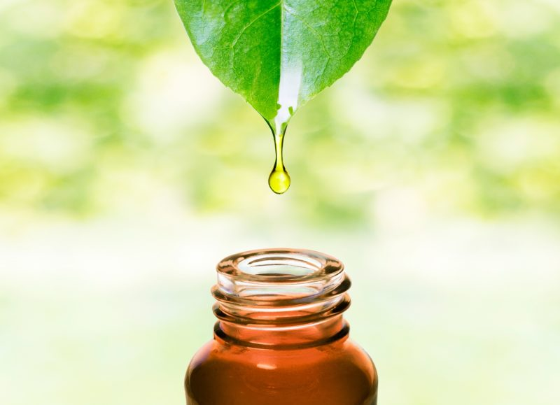Global Plant Extract Market Forecasted to Grow at CAGR of 16.5%    WholeFoods Magazine