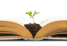 Plant growing from an old opened book, isolated on white background, education or recycling concept