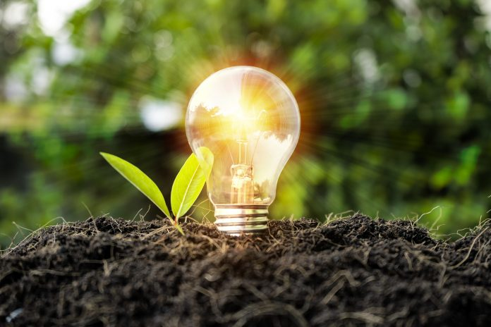 Growth concept. Including learning, education, investment, business sector, technology, innovation. Comparison of bulbs grown in the soil and illuminating the sides, with leaves